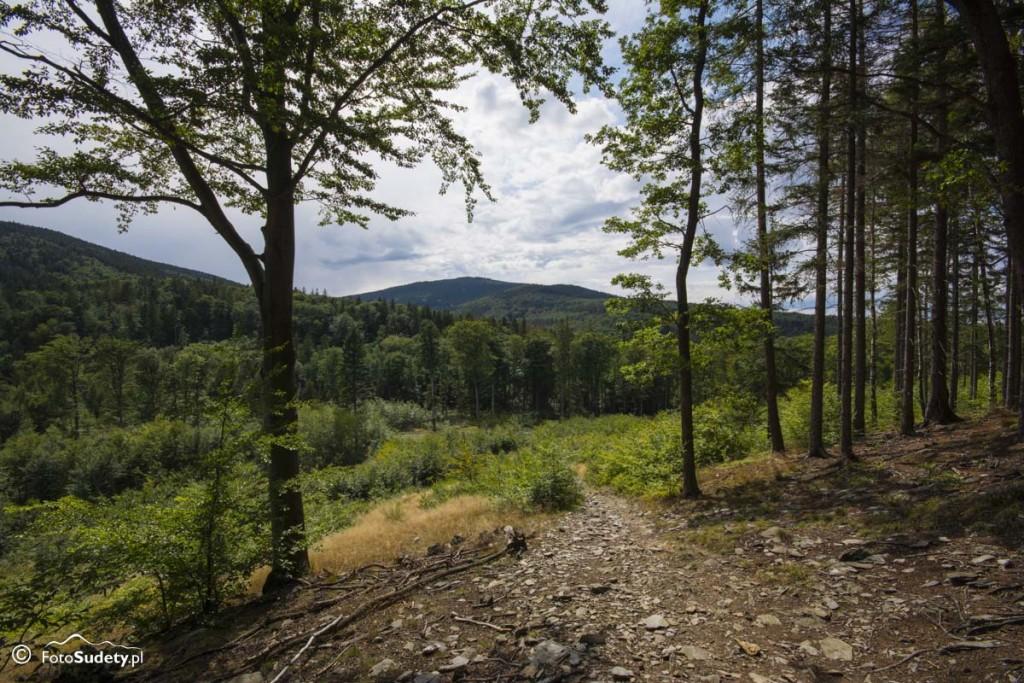 Góry Opawskie: Pokrzywna – Zamkowa Góra – Biskupia Kopa