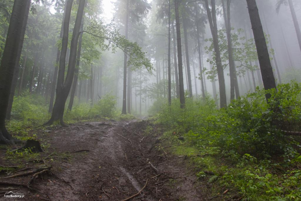 Główny Szlak Sudecki – Etap IX (Zygmuntówka – Lubawka)