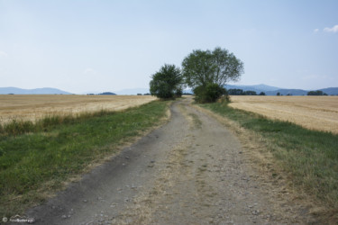 026 Polna droga między Gierałcicami a Sławniowicami