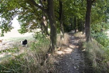 079 Szlak z Lisich Kątów do Unikowic