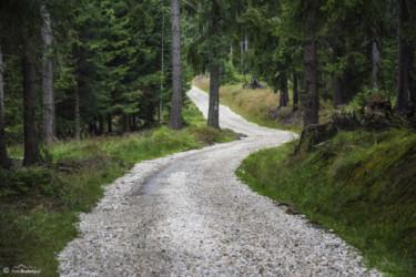 016 szlak w kierunku Lasówki