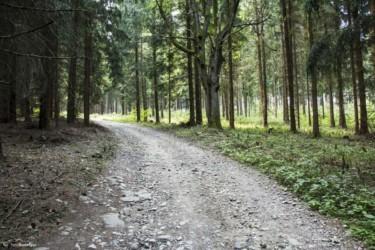 074 Szlak powyżej Kątów Bystrzyckich