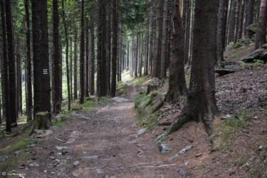 079 Szlak w okolicy Wilczyńca