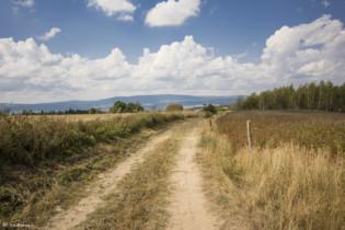 156 Szlak z Marianówki do Wilkanowa