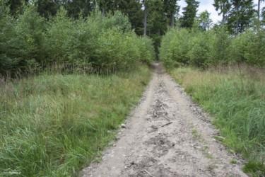 005-w-kierunku-wigancickiej-polany